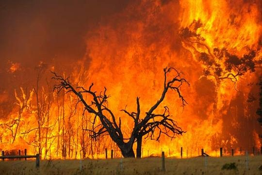 Bushfire2